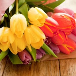 A bunch of fresh cut tulips.