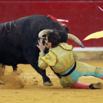 A bull fighter knocked down by a bull.